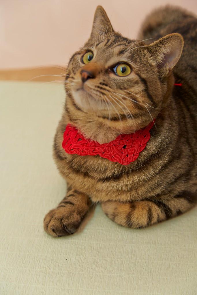 猫の水引アクセサリー ネックレス