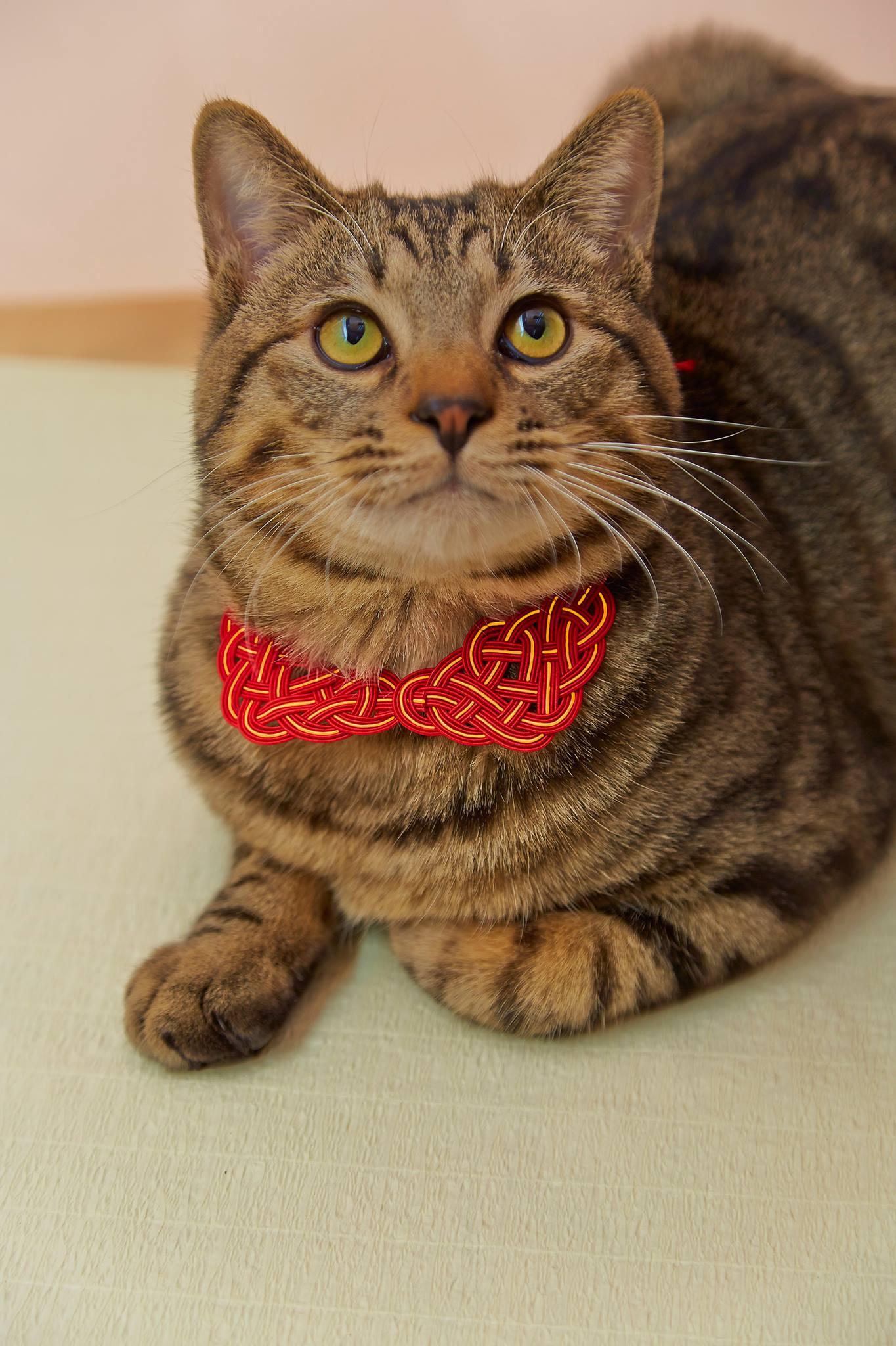 猫のお守り 赤金版 猫着用写真
