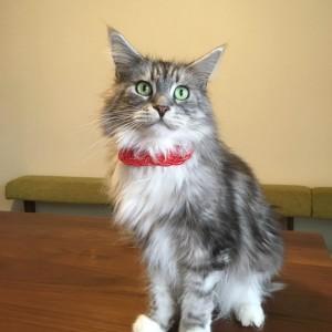猫の首輪飾り 水引お守りロンロン君