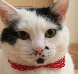猫の水引お守り首輪 赤金版 キャッチ用